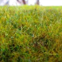 Modelling Static Grass