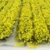 Daffodil6mmtuftstrips 6
