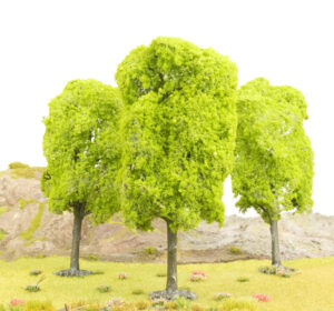 Large Elm Tree 1