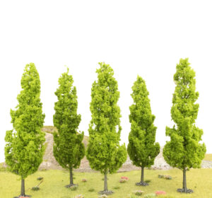 Tall Poplar Type Tree 1