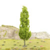 Tall Poplar Type Tree 2