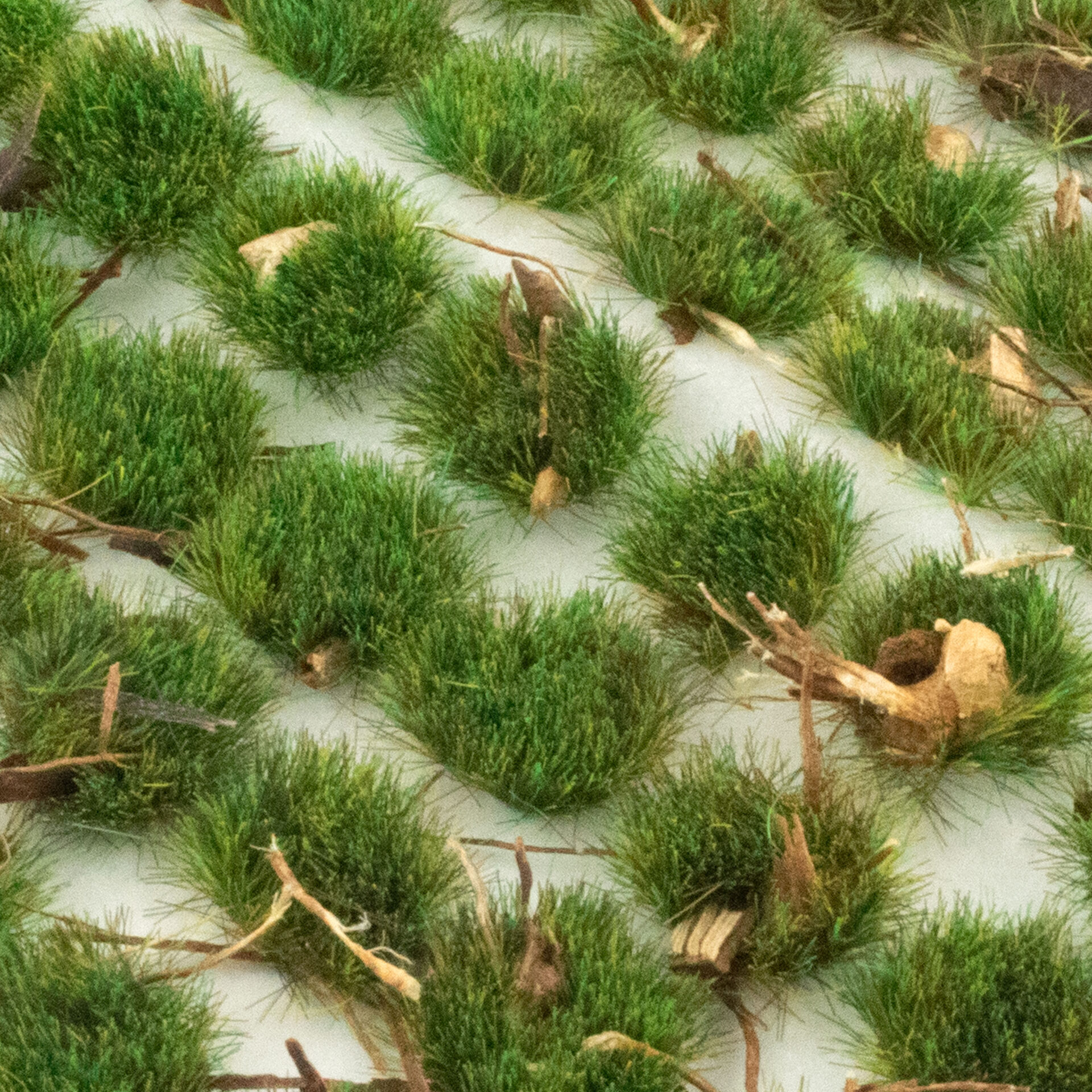 Forest Ground Cover Self Adhesive Static Grass Tufts X 100 Wwscenics
