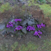 Heather 4mm Static Grass Tufts 4